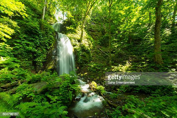 green tree and water fall - saha entertainment stock pictures, royalty-free photos & images