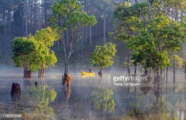 green tree forest on misty lake - taiwan fotografías e imágenes de stock