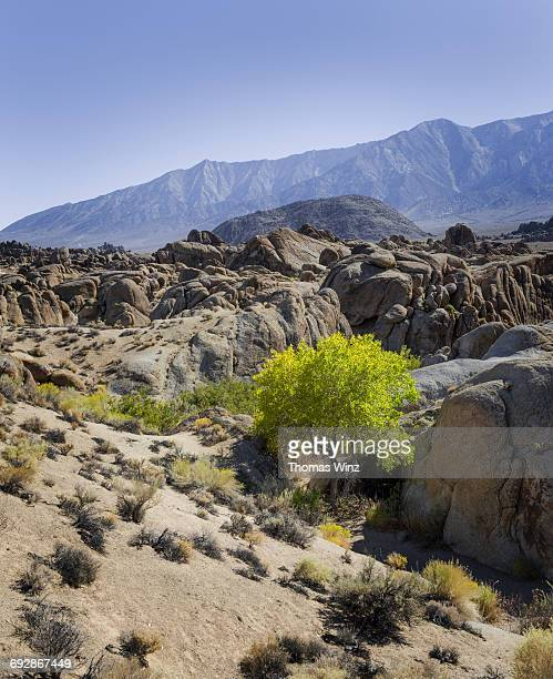 green tree in a dry creek bed - central california stock pictures, royalty-free photos & images