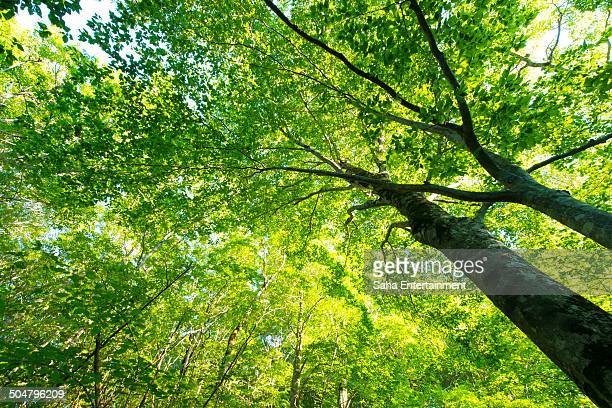 green tree in the forrest - saha entertainment stock pictures, royalty-free photos & images