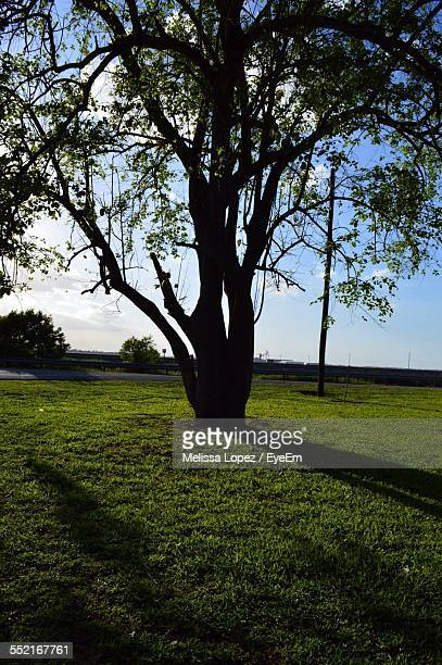 green tree on lawn - lopez stock pictures, royalty-free photos & images