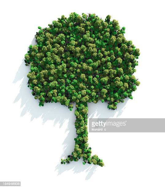 green tree - tree area stock pictures, royalty-free photos & images