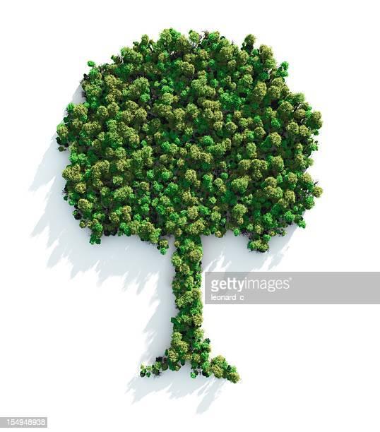 green tree - baum stock-fotos und bilder