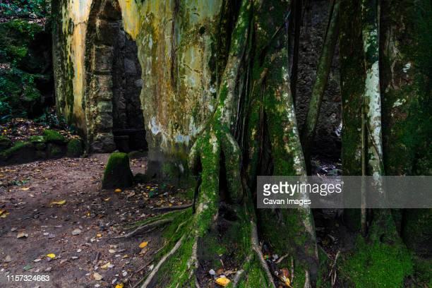 green tree steam - sintra fotografías e imágenes de stock