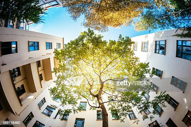green tree surounded by residential houses - grün stock-fotos und bilder