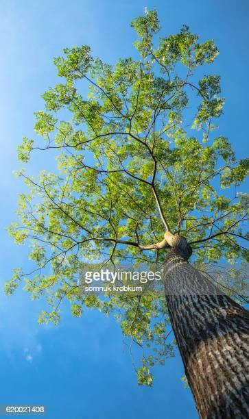 Green tree under blue sky