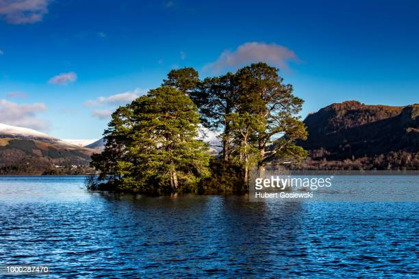 green tree with mountains in background in lake district
