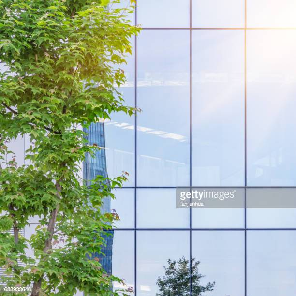 green tree with urban architecture,detail shot of business building