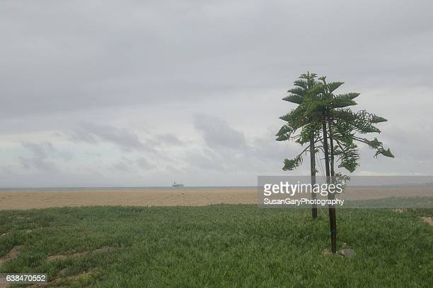 green trees at the beach - image title stock pictures, royalty-free photos & images