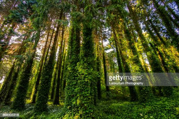 Green Trees in forrest