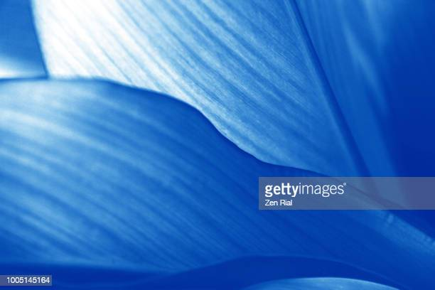 green tropical leaves converted to blue, shows leaf edges and leaf veins - toned image stock pictures, royalty-free photos & images