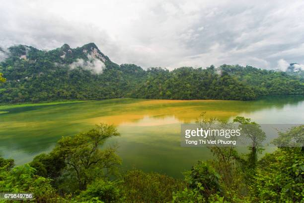 green tropical rain forest and water of the lake in ba be national park, bac kan province, vietnam - gorgeous babes fotografías e imágenes de stock