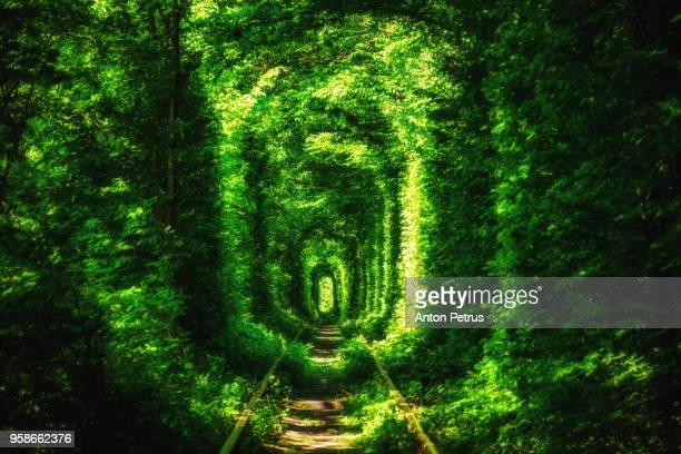 green tunnel of trees in the forest . tunnel of love. klevan, ukraine. - eternity stock pictures, royalty-free photos & images