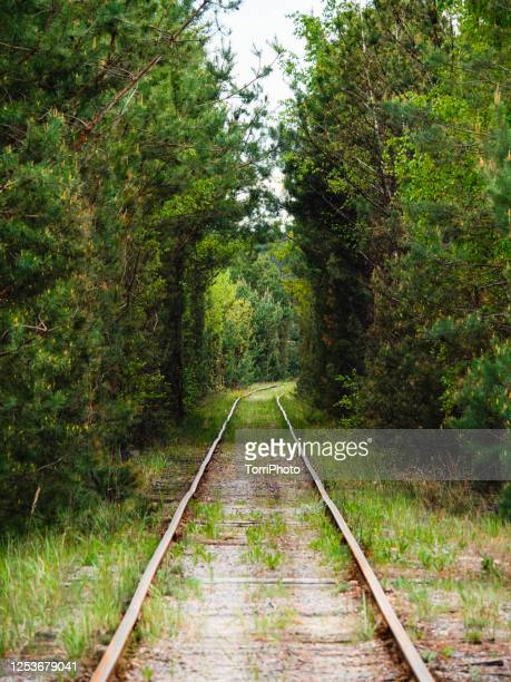 green tunnel of trees in the forest with old railway - 愛のトンネル ストックフォトと画像