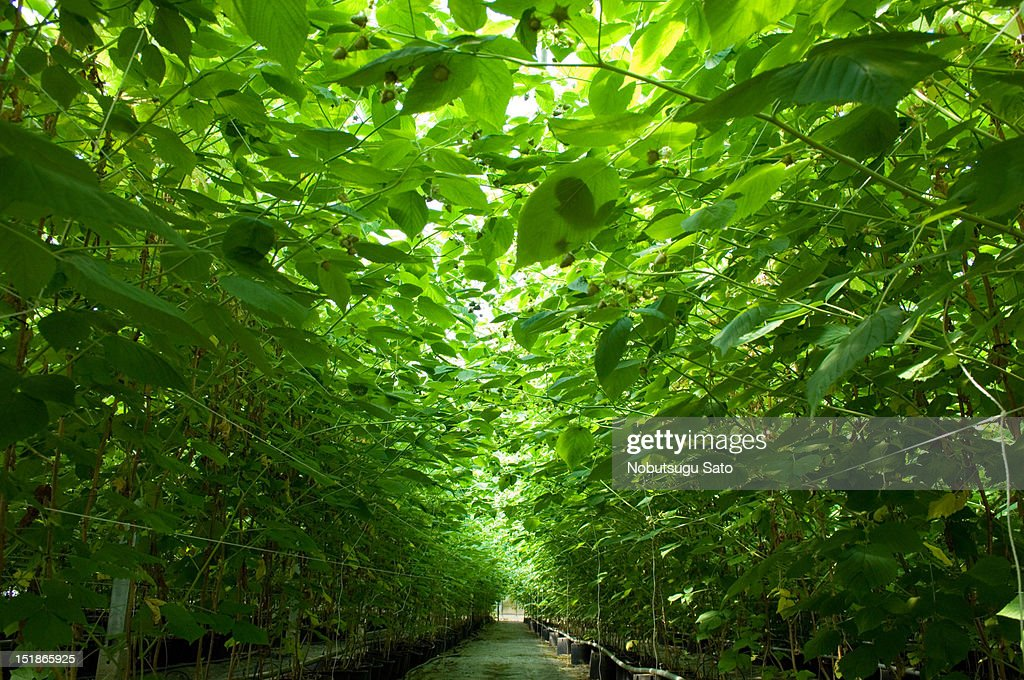 A green tunnel : Stock Photo