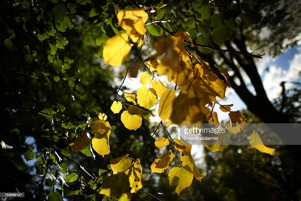 Green turns to yellow in Hyde Park on October 12, 2012 in London, England. Autumnal colours are beginning to show in parts of the United Kingdom.