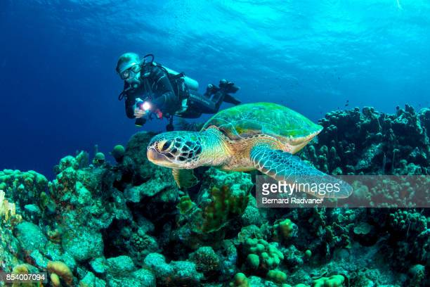 green turtle and a scuba diver - ボネール島 ストックフォトと画像