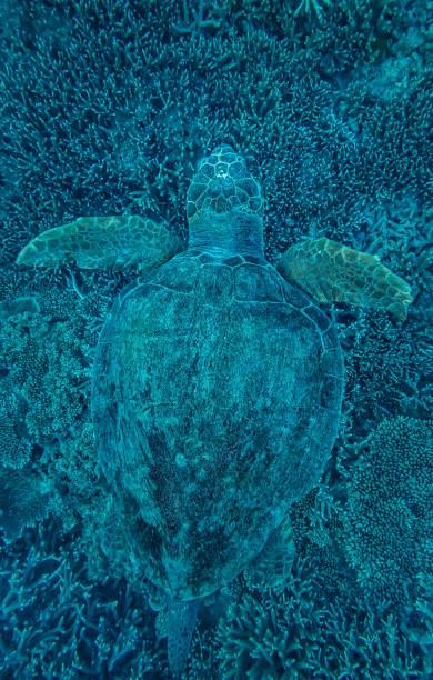 Green Turtle Hidden In Coral Wall Art