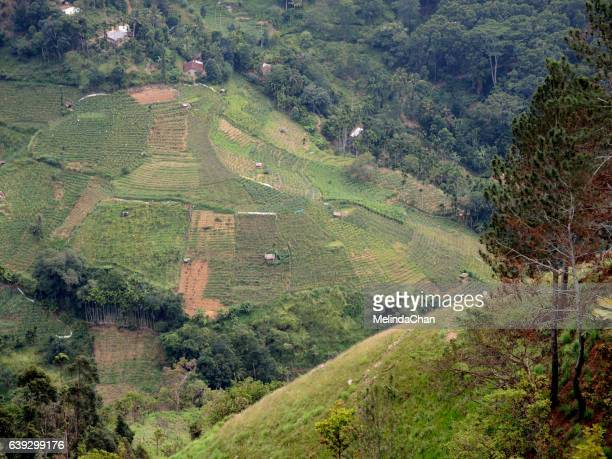 Green Valley and tea garden  in Little Adam's peak in Ella , Sri Lanka