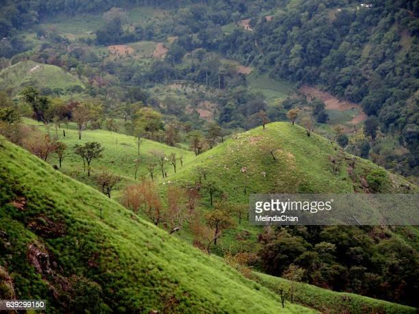 Green Valley in Little Adam's peak in Ella , Sri Lanka