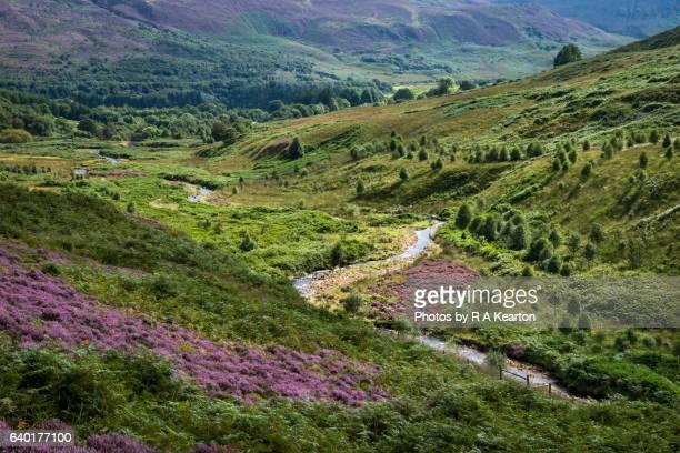 green valley in mid summer - heather brooke ストックフォトと画像