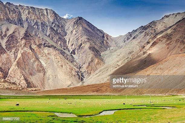 green valley in summer in leh ladakh,india - kashmir stock photos and pictures