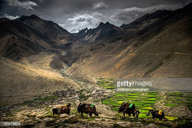 Green valley in Tibet