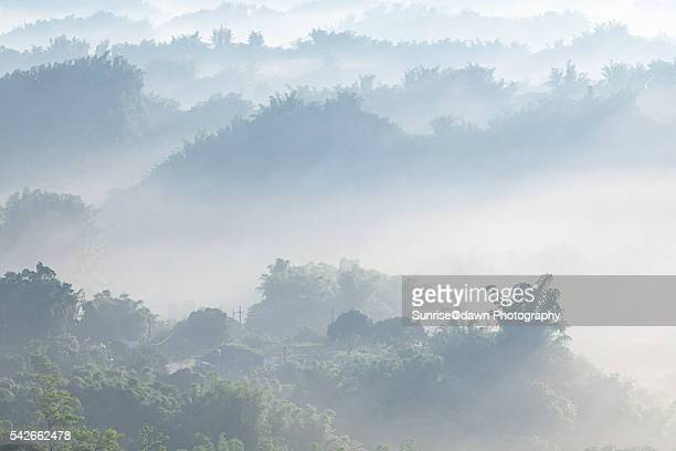 Green Valley in White Mist