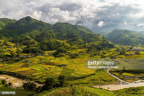 green valley with rice fields