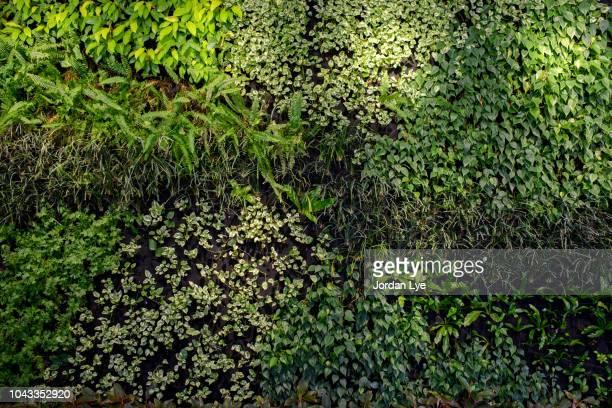 green wall, biowall, plants - flore photos et images de collection