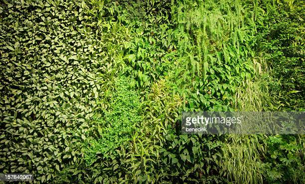 Green Wall, BioWall, Plants