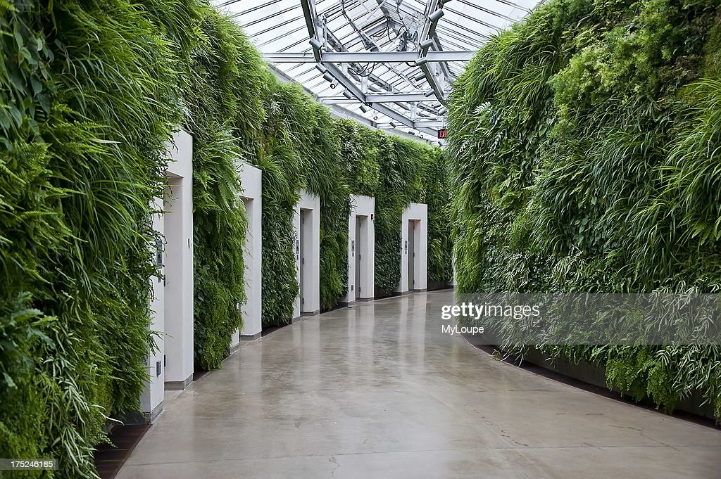 Green Wall In East Conservatory Longwood Gardens Kennet Square Pennsylvania