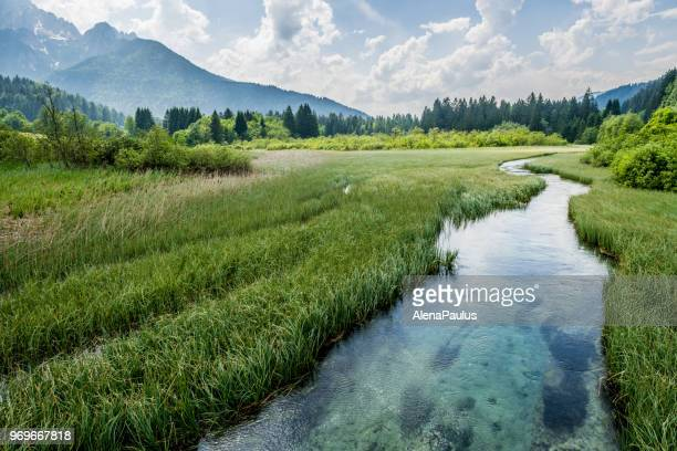 grünes wasser in alpen - feuchtgebiet stock-fotos und bilder