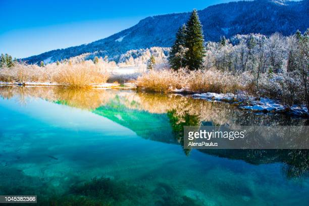 green water of zelenci in winter - mere noel stock pictures, royalty-free photos & images