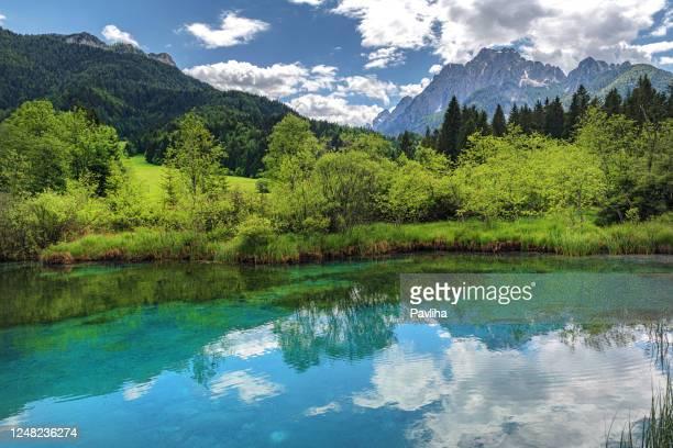 green water, zelenci, triglav national park, gorenjska, julian alps, slovenia, europe - slovenia stock pictures, royalty-free photos & images