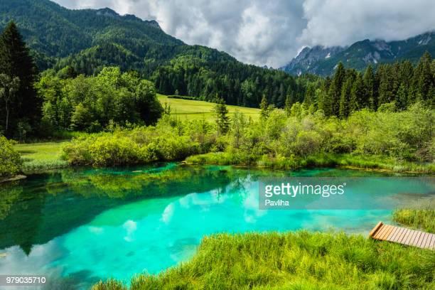 água verde, zelenci, parque nacional de triglav, gorenjska, alpes julianos, eslovênia, europa - parque nacional - fotografias e filmes do acervo