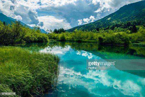 green water, zelenci, triglav national park, gorenjska, julian alps, slovenia, europe - national landmark stock pictures, royalty-free photos & images