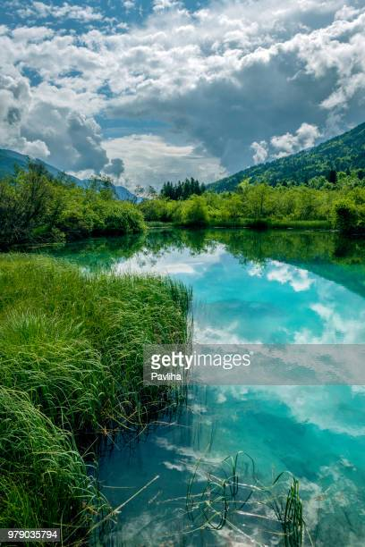 green water, zelenci, triglav national park, gorenjska, julian alps, slovenia, europe - vertical stock pictures, royalty-free photos & images
