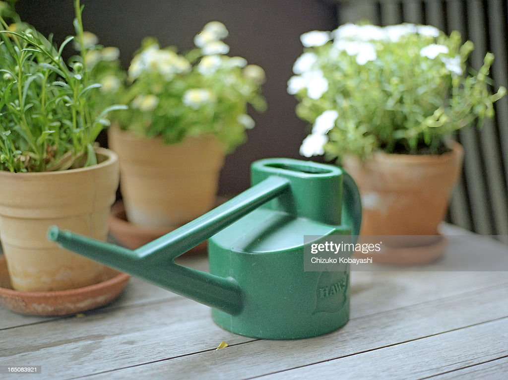 Green watering can : Stock Photo
