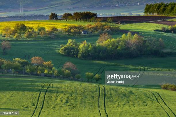 Green wavy hills