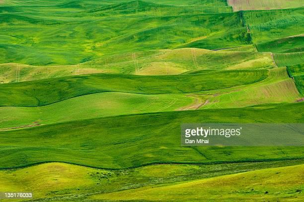 green wheat field - hügelkette stock-fotos und bilder