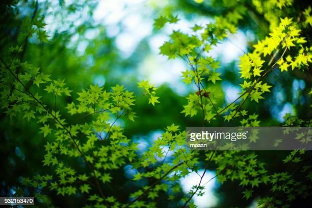 green whispers - 新緑 ストックフォトと画像