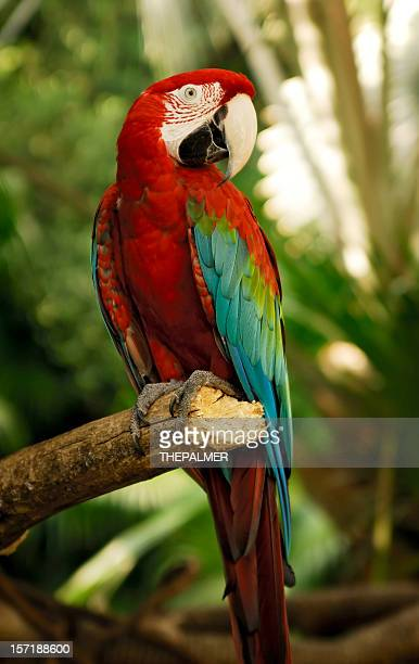 green wings macaw - vertical stock pictures, royalty-free photos & images