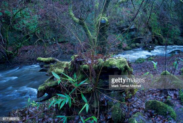 green winter - brook mitchell stock pictures, royalty-free photos & images