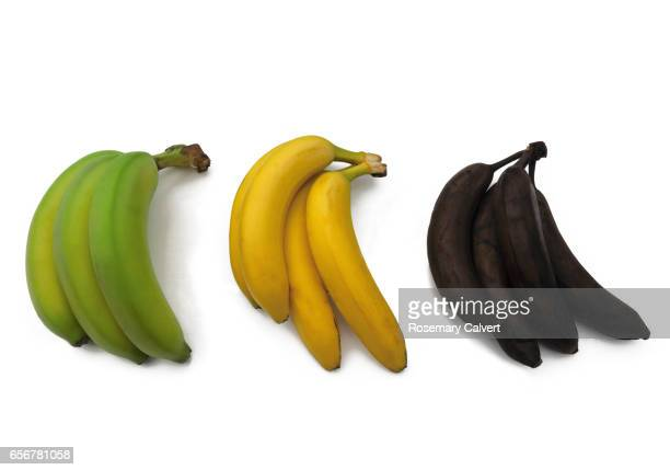 Green, yellow and black bananas illustrate ripening process.