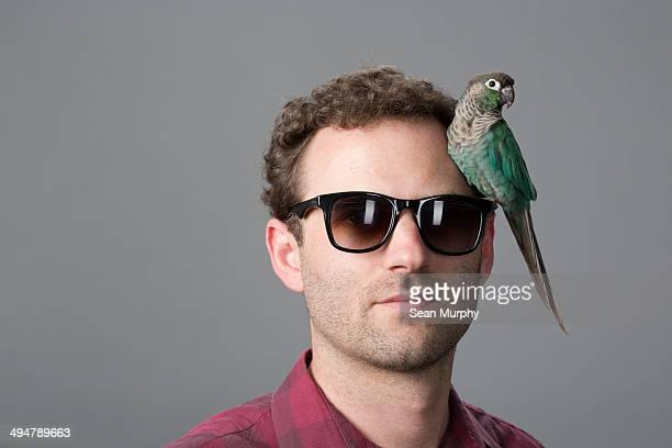 green-cheeked parakeet on man's glasses - 止まる ストックフォトと画像