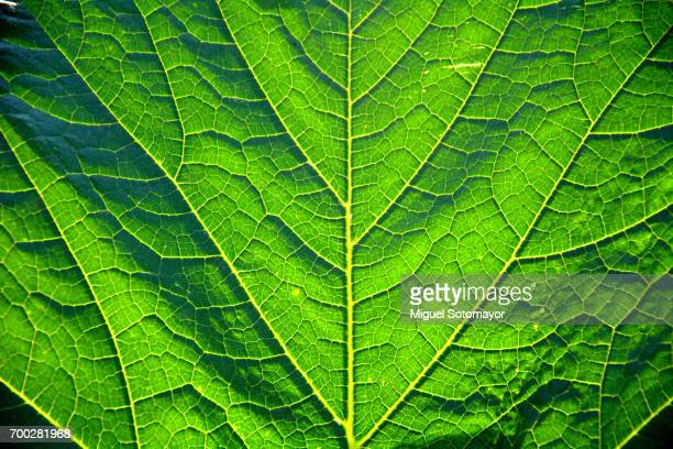 greenery. chlorophyll green - sustainability stock photos and pictures