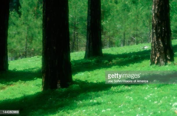 Greenery on forest floor at El Dorado National Forest California