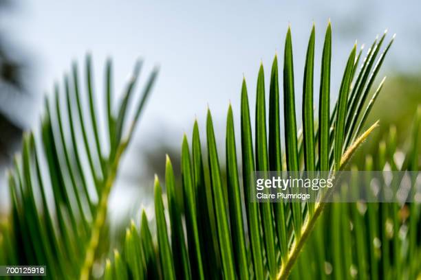 greenery - claire plumridge stock pictures, royalty-free photos & images