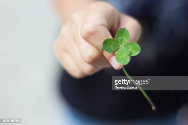 greenery - 4 leaf clover stock photos and pictures